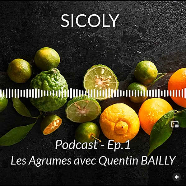 SICOLY_Podcast